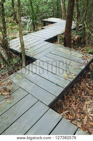Wooden Boardwalk In Forest