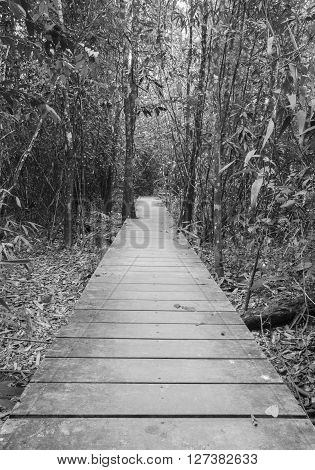 Wooden Boardwalk In Forest (black & White)