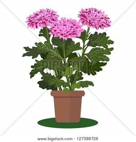 Vector illustration plant in pot. Blooming flower