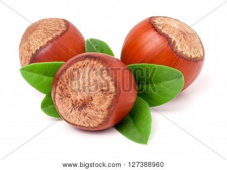 Three hazelnuts with leaves isolated on white background close-up macro.