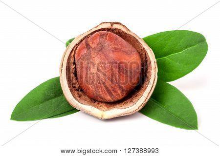 one hazelnuts with leaves isolated on white background close-up macro.