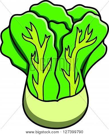 Lettuce doodle illustration .EPS10 editable vector illustration design
