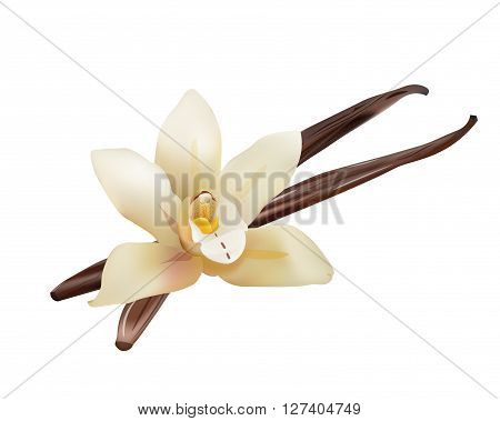 Realistic Vanilla Flower and Sticks. Vector Isolated Illustration Icon, 3d