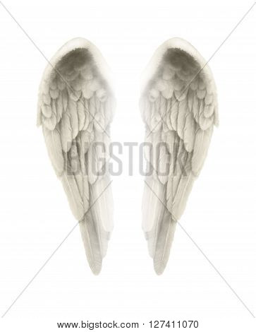 3d Illustration of Angel Wings Isolated on white background  - Finely detailed symmetrical  illustration of isolated angel wings with a tinge of gold coloring