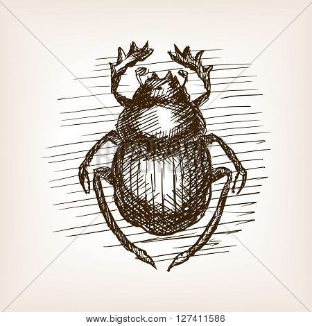 Scarab beetle insect sketch style vector illustration. Old engraving imitation.