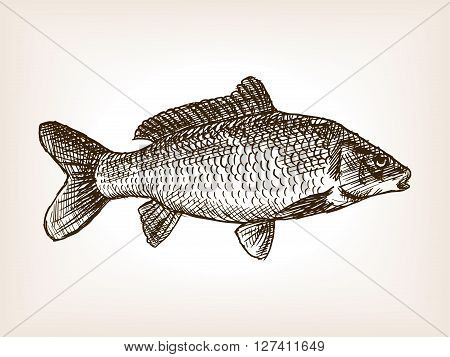 Carp fish sketch style vector illustration. Old engraving imitation.