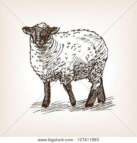 Sheep sketch style vector illustration. Old engraving imitation.