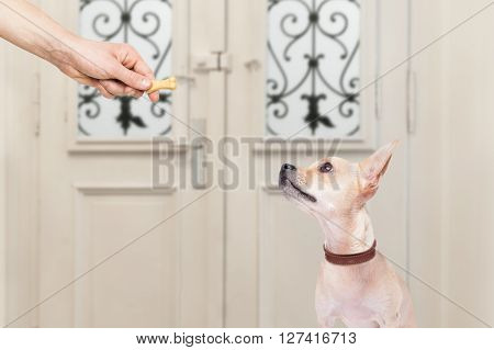 Dog And Owner  With A Cookie Treat