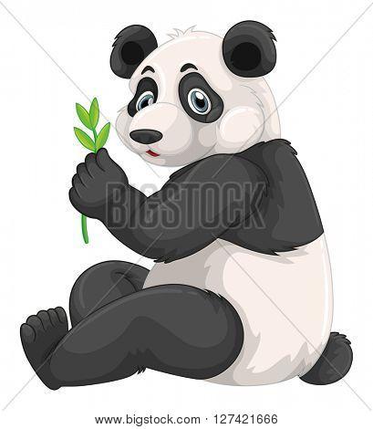 Panda chewing green leaves illustration