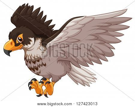 Eagle spreading its wings illustration