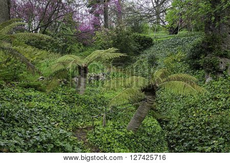 green and leafy forest in Capricho park. Madrid Spain
