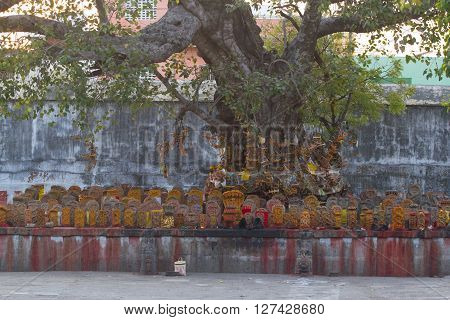 Group of yellow tombs with red dots in Shiva temple, Kanchipuram, Tamil Nadu