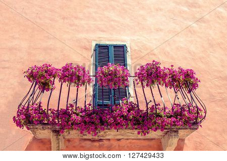 purple flowers balcony purple background texture floreal