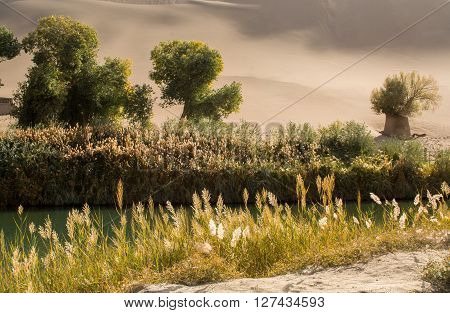 Oasis in desert at Mingsha Shan Dunhuang Gansu Province China