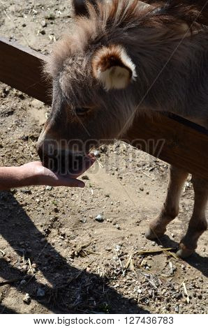 Donkey behind a wooden fence in Sardinia Italy