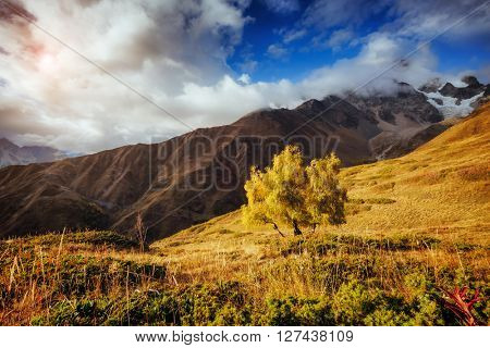Nice views of  Mt. Ushba and lonely birch illuminated by sunlight. Dramatic and picturesque scene. Location famous place Mestia, Upper Svaneti, Georgia, Europe. High Caucasus ridge. Beauty world.