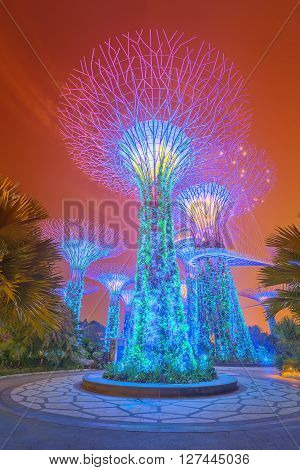 SINGAPORE - May 14 2015: Night view of The Supertree Grove at Gardens near Marina Bay. Gardens by Bay was crowned World Building of Year at World Architecture Festival 2012.