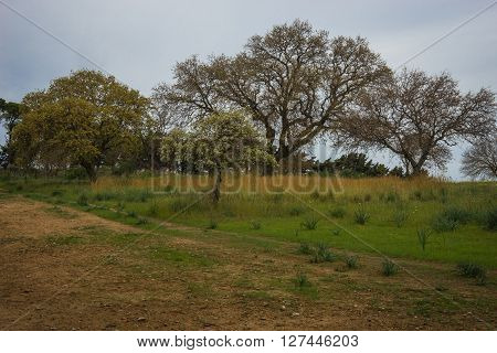 Scenic landscape with trees at Mount Filerimos on Rodos island, Greece