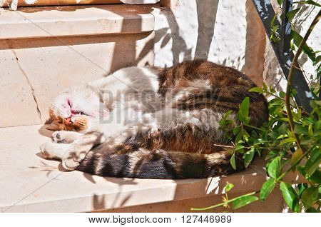 Image of a domestic cat sleeping on step.