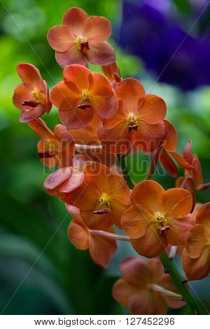 Perfect orange orchid flower in park botany