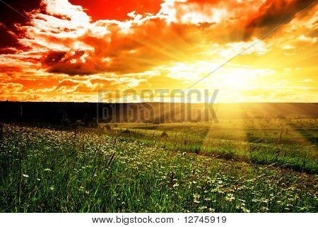 summer landscape field of green grass and sunset