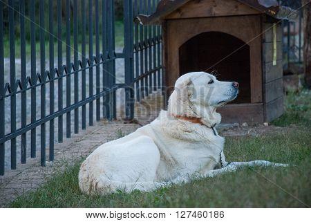 Cane che riposa davanti alla propria cuccia