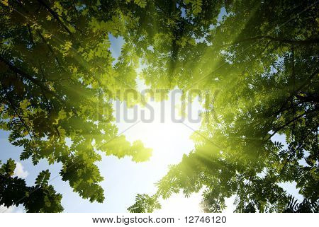 rays of sun in deep forest