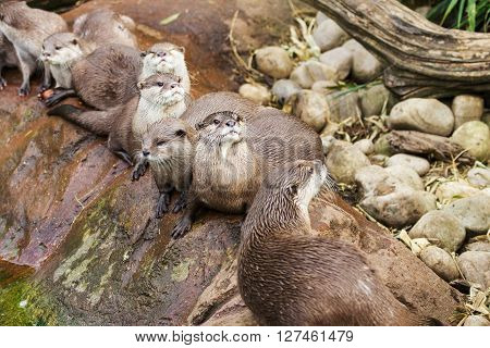 Lovely playful otters near pool swim wild