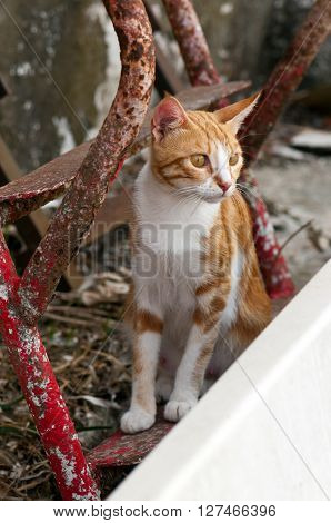 A shot of a ginger-white cat sitting on the ground