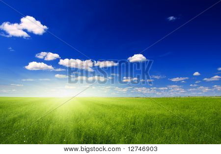 field of green flax and sun