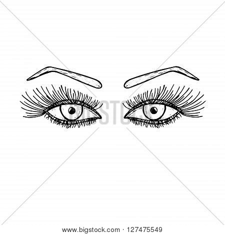 Hand drawn eyes with long eyelashes. Women female eye with an eyebrow. Fashion beauty trend. Vector illustration.