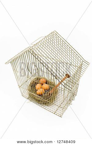 Eggs In Nest Confined In Bird Cage