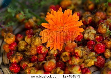 The photo shows the orange flower of calendula and cloudberries