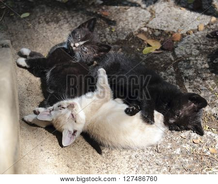 Three feral kittens catching some sunbeams in a gutter.