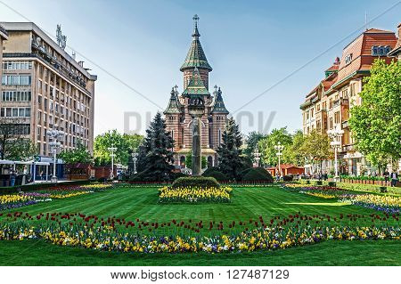 TIMISOARA ROMANIA - APRIL 15 2016: Floral arrangements in Victory Square with orthodox cathedral in background.