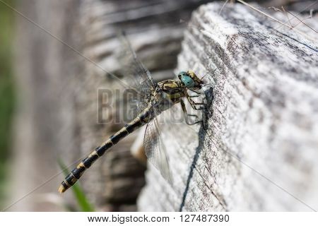 Dragonfly in a trunk, very detailed photo