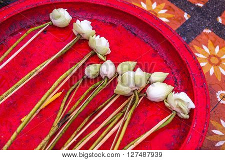 White lotus flowers on red tray as offerings in Buddhist temple in Northern Thailand