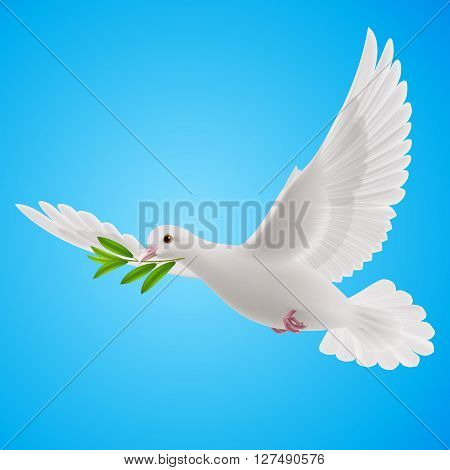 Dove of peace flying with a green twig after flood on blue background