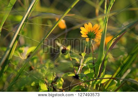 Spring flowers in the meadow. Dim background . ** Note: Shallow depth of field