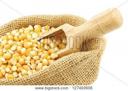 yellow corn grain in a burlap bag with a wooden scoop on a white background