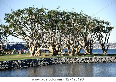 SAN DIEGO, UNITED STATES - DECEMBER 25: Tourists strolling behind ornamental trees on the waterfront of Navy Pier on December 25 2015 at the Port of San Diego.