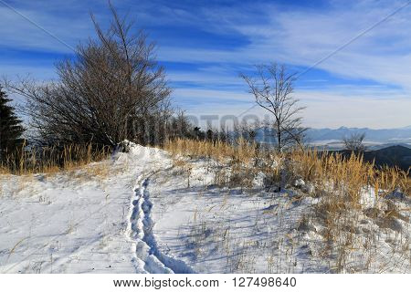 scene with pathway on winter meadow in mountains