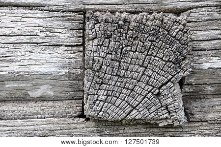 wall of log house for your design