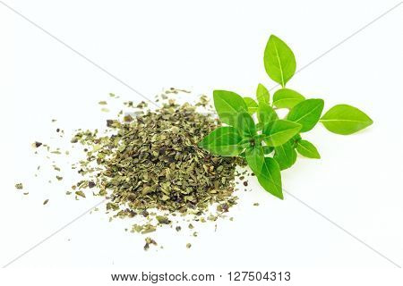 Branch of fresh and heap of dry origanum on white isolated background