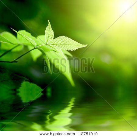 grüne Blätter im tiefen Wald