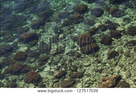 seabed. top view