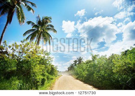ground road in jungle. Dominican republic