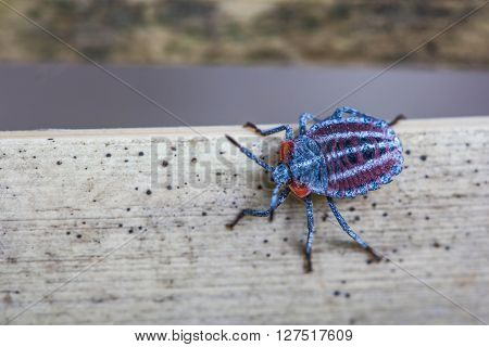 a red cute shield bug on nature background