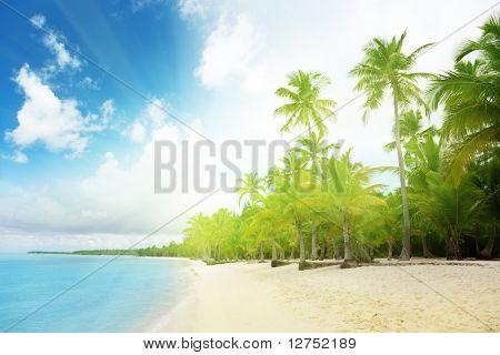 Mar Caribe y las Palmas