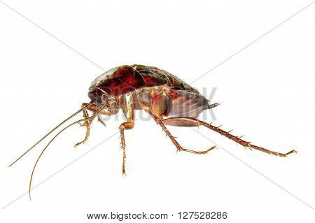 image on a white background homemade insect cockroach